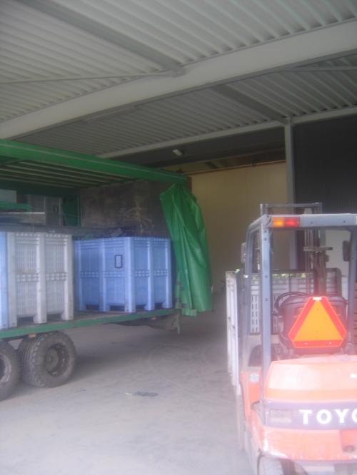 unloading broccoli