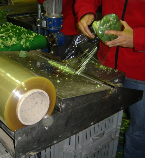 manually sealing of broccoli